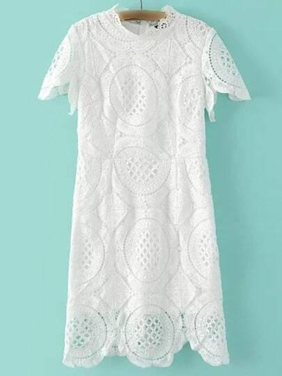 White Band Collor Lace Zipper Dress